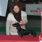 dogshow2011