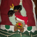 chiot 06.12.2007