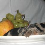 Chiot 22.10.2008